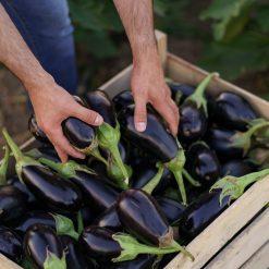 Aubergines dans l'huile d'olive Bio - Radici - Pauline&Olivier